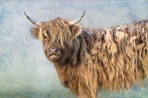 Highland Cattle von Louise Heusinkveld