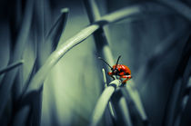 Firebug von spotcatch-net-photography