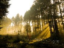 Lichterspiel im Wald von Marc Seeh