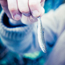 Small fish by Lars Hallstrom