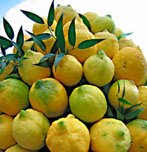 lemons von Leopold Brix