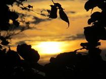 sonnenuntergang durch die blätter  by elfriede zitas