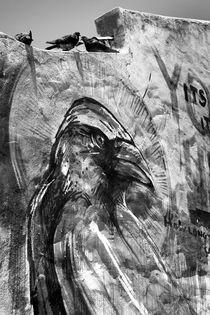 Aspiring Pigeons by Stephen Williams