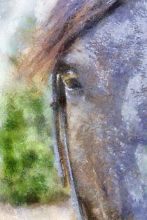 Horse-whisperer-3