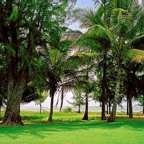 Green Paradise von Peter Tomsu