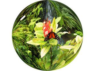 Schmetterlinginderglaskugel