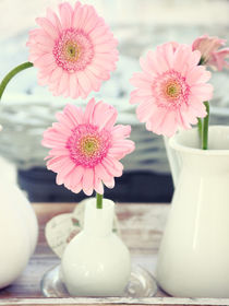 Pink Gerbera Stilllife by syoung-photography