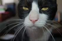 Whiskers by bibi-photo-hunter