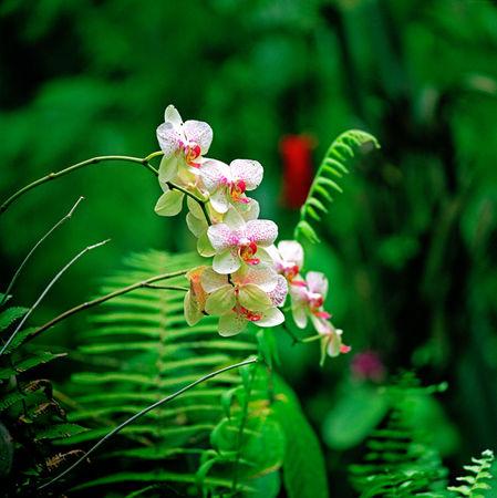 Hawaii-beauty