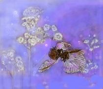 Orchidee by Heidi Schmitt-Lermann