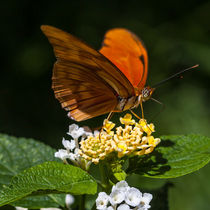 pretty orange butterfly feeding von Craig Lapsley