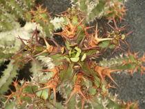 Kaktus von oben von Anke Wetter