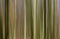 Wald von Barbara  Keichel