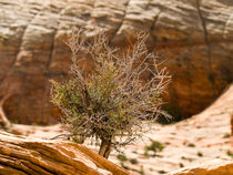Tree in Rocks by Peter Tomsu