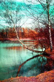 Birken  von Violetta Honkisz