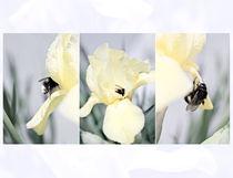 Iris and a Bumblebee Triptych von olgasart