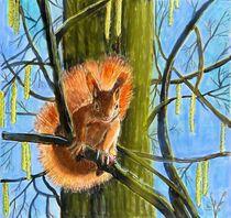 Das Eichhörchen von Heidi Schmitt-Lermann