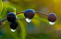 Frozen Drops by Keld Bach