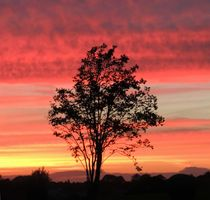 Rowan Tree Sunset by John McCoubrey