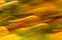 Autumn Abstraction von Keld Bach