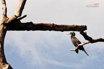 Lagoon-bird6-sig