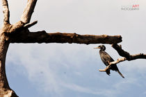 Lagoon Bird by reorom