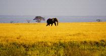 African Savanna von Pravine Chester