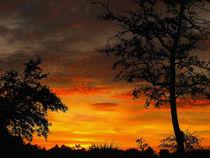Sunset by Zoila Stincer