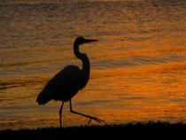 Bird Silhouette  by Zoila Stincer
