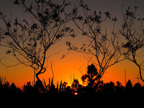 Sunset & Silhouettes by Zoila Stincer