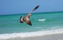 Seagull - Miami Beach by Zoila Stincer