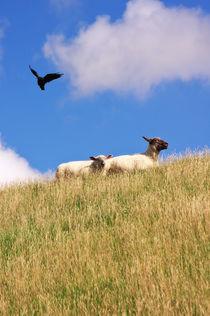 Glückliche Schafe  von AD DESIGN Photo + PhotoArt