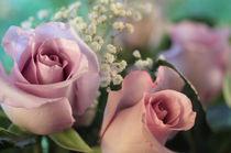 Purpleroses2-6919-3