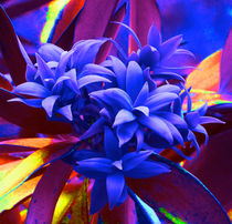Fantasy Pine by Margaret Saheed