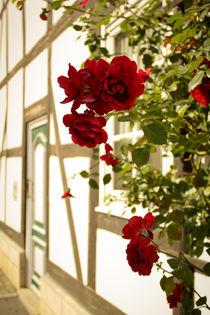 Red Roses von sylbe