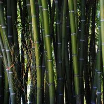 Bambus von Karin Stein