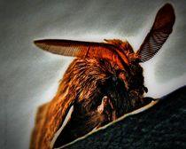 Moth-large-watermarked-jpg