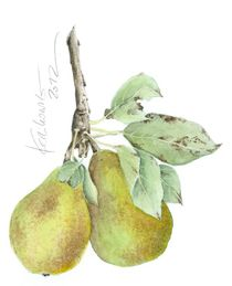 """""""Zwei Birnen"""" / """" Two Pears"""" von farbart"""