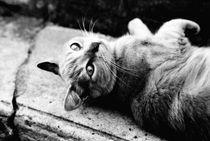 le chat von Ben Ulke