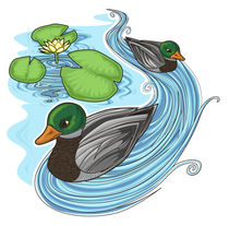 waterlilies and ducks by sushy