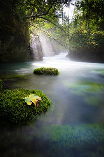 Autumn von spotcatch-net-photography