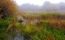 Misty Wetlands von Keld Bach