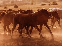 Dsc-1690-herd