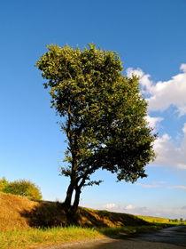 Der schiefe Baum  by picadoro