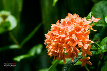 Flower (unknown) von reorom