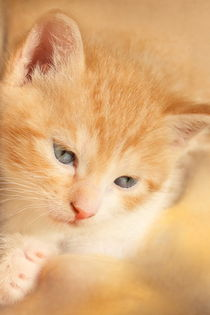 Kitten rot von Christine Bässler
