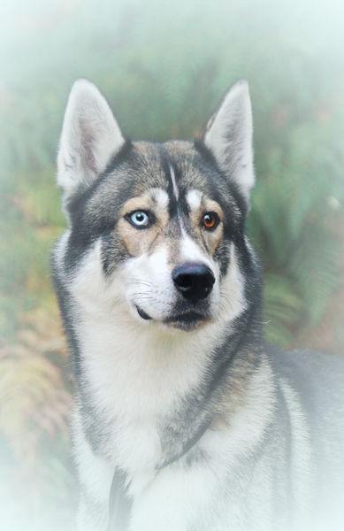Dog-9