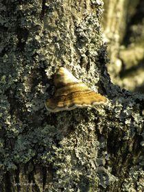 Flechten und Pilz von badauarts