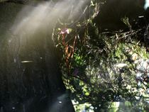 Die Sonne im See von badauarts