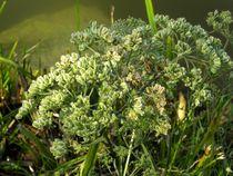 Seeufer grün by badauarts